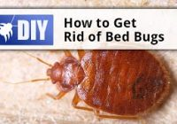 Pest Control Treatment for Bed Bugs
