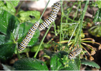 How to remove harmful insects from your garden