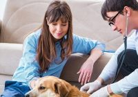 Taking Care of your Pets through Vet House Calls Melbourne