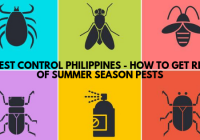Pest Control Philippines – How to get rid of summer season pests