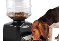 Home-Made Dog Food and High Fiber Dog Food Benefits