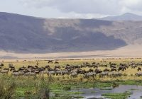 Why Ngorongoro Conservation Area Is A Must-Visit In Tanzania